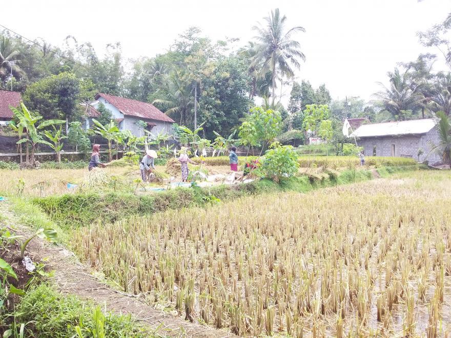 Image : Belajar Bertani Organik (Bikin Sehat dan menyenangkan gaess)
